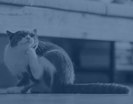 Pet Allergies in Wilkesboro: Cat Scratching Chin