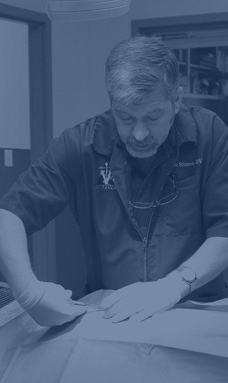 Pet Surgery in Wilkesboro: Veterinarian Operating On Patient