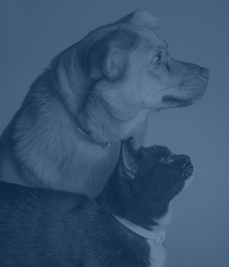 Spay and Neuter Surgery in Wilkesboro: Cat and Dog Standing Together