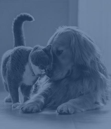 Pet Vaccinations in Wilkesboro: Cat Snuggles Dog