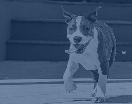 Pet Diagnostics in Wilkesboro: Dog Running